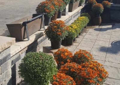 Fletcher Richard Landscape Supplies Straw Mumms 2