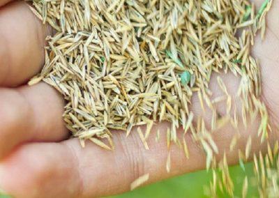 Grass Seed Fletcher Rickard Landscape Supplies