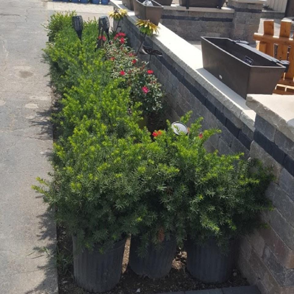 Landscape Supplies South Lyon Milford Novi Northville